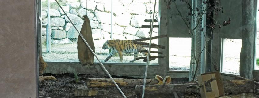 Walter Zoo Tigerverglasung